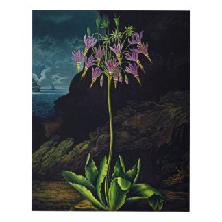 Flower Art Forms The American Cowslip