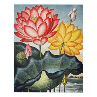 Flower Art Forms The Egyptian Water Lily