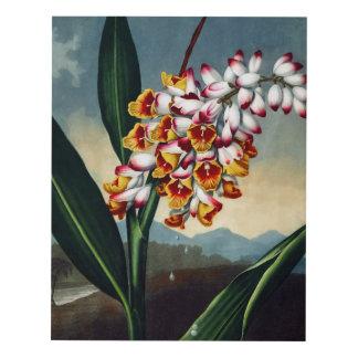 Flower Art Forms The Nodding Renealmia