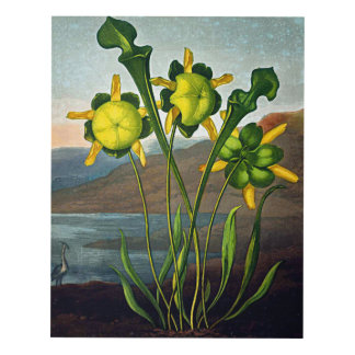 Flower Art Forms The Pitcher Plant