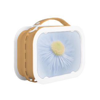 Flower Aster Lunch Box