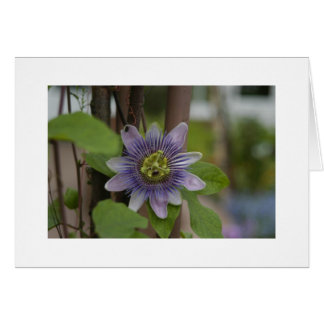 Flower at Phipps Conservatory Card