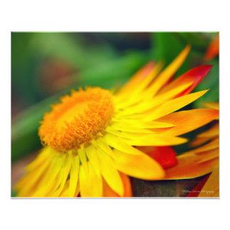 Flower at Sunset Photo Print