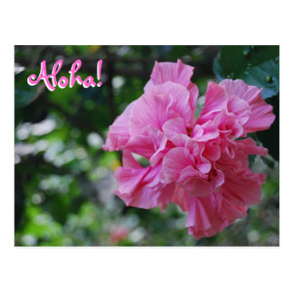 Flower at Waimea Audubon - Hawaii Postcard