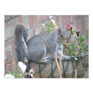 Flower Basket Squirrel Raid Photo Print