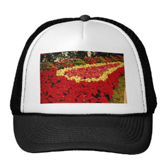 Flower bed, red, white and pink poinsettias  flowe hats