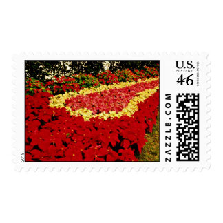Flower bed red white and pink poinsettias flowe stamp