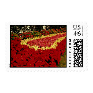 Flower bed red white and pink poinsettias postage stamps