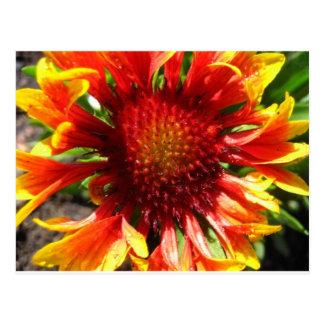 flower,blanket flower postcard
