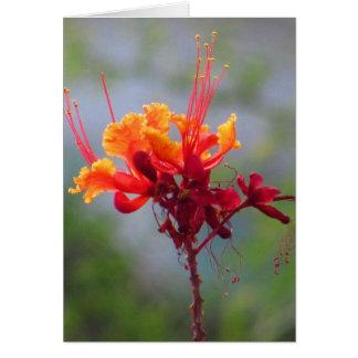 Flower Bliss Card