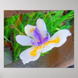 Flower Bliss Poster