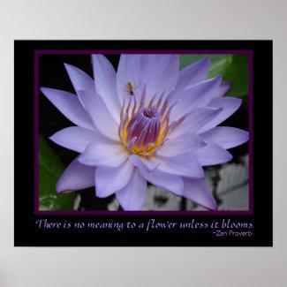 Flower Blooms Zen Proverb Purple Water Lily & Bee