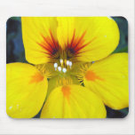 flower blossom mouse pads