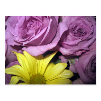 Flower Blossoms Daisy Roses Love Destiny Post Card
