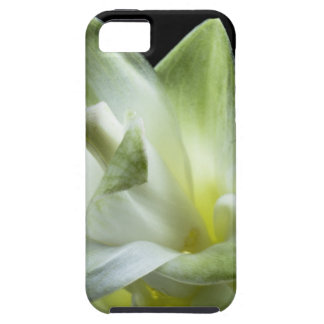 flower blossoms white Love Kiss Make Up iPhone 5 Cover