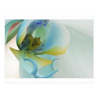 Flower Blue Orchid Postcard