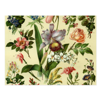 Flower Botanicals Postcard