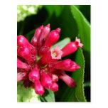 Flower - Bouquet - Pink Post Card