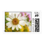 Flower Bouquet - White Daisy Stamps