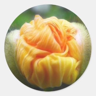 Flower Bud - Iceland Poppy Classic Round Sticker