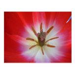 Flower bud postcard