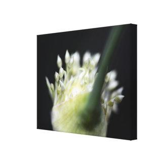 Flower Bulb Canvas Print