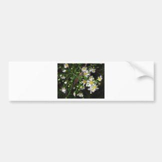 Flower Cards and Stationary Bumper Stickers
