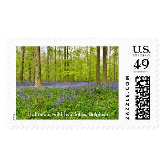Flower carpet of wild hyacinths stamp
