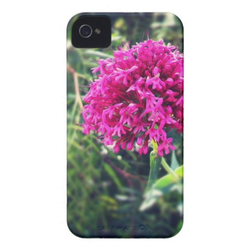 Flower case Case-Mate iPhone 4 case