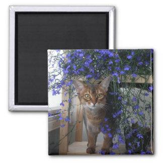 Flower Cat 2 Inch Square Magnet