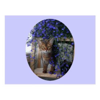 Flower Cat (oval) Postcard
