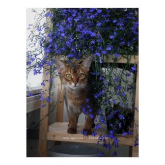 Flower Cat Posters