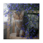 """Flower Cat Tile<br><div class=""""desc"""">A pretty Aby girl in the middle of beautiful blue flowers</div>"""