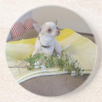 Flower Chihuahua Coaster