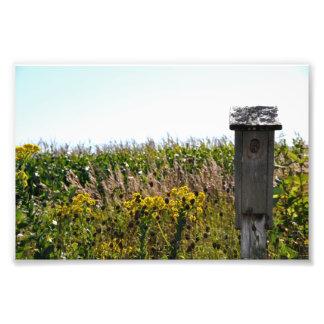 Flower Coop Photographic Print