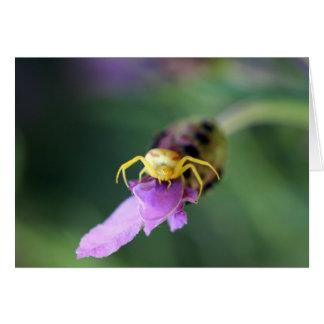 Flower Crab Spider ~ Misumena vatia Card