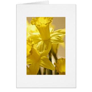 Flower Daffodil 3 Greeting Card