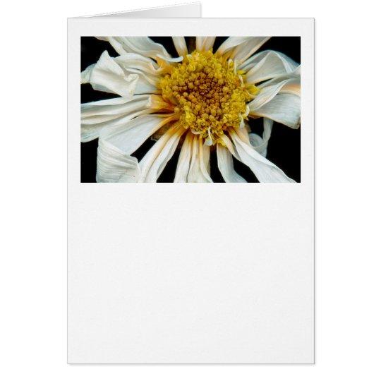 Flower - Daisy - Drunken sun Card