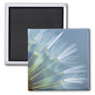 Flower Dandelion Seed Head 2 Inch Square Magnet