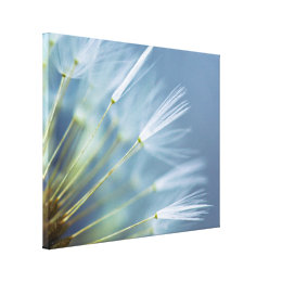 Flower Dandelion Seed Head Canvas Print