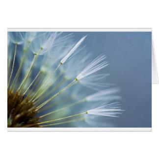 Flower Dandelion Seed Head Card
