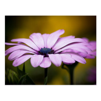 Flower drop of rain postcard