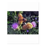 flower_DSC1303-1 Postales