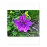 flower_DSC1307-1 Postal