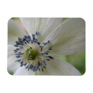 Flower featuring stamens magnet