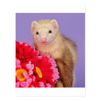 Flower Ferret Post Cards