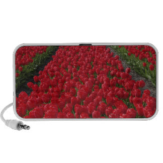 Flower field of tulips Netherlands Holland Speaker