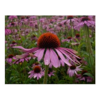 flower field postcard