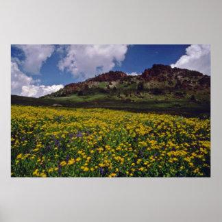Flower fields near Sonora Pass, California Pink fl Poster
