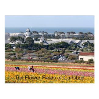 Flower Fields of Carlsbad Postcard